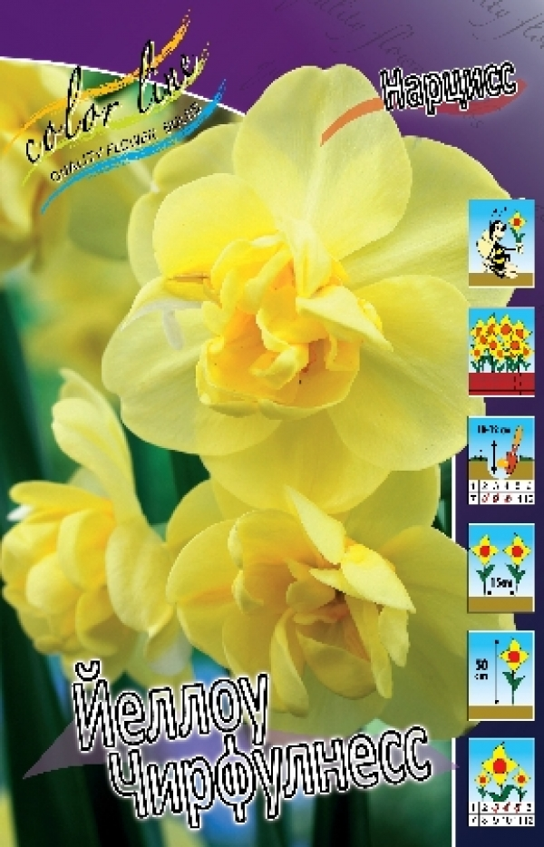 Narcissus Yellow Cheerfulness Нарцисс Йеллоу Чирфулнесс