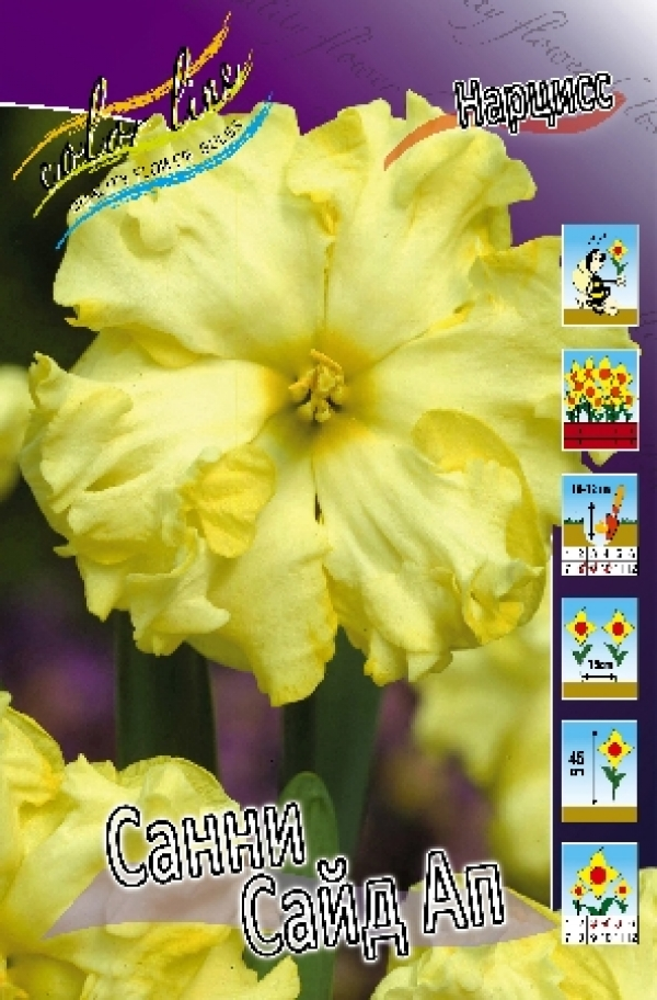 Narcissus Sunny Side Up Нарцисс Санни Сайд Ап