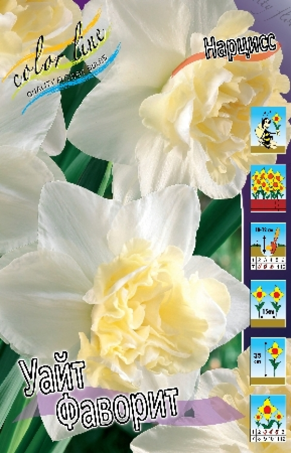 Narcissus White Favorite Нарцисс Уайт Фаворит