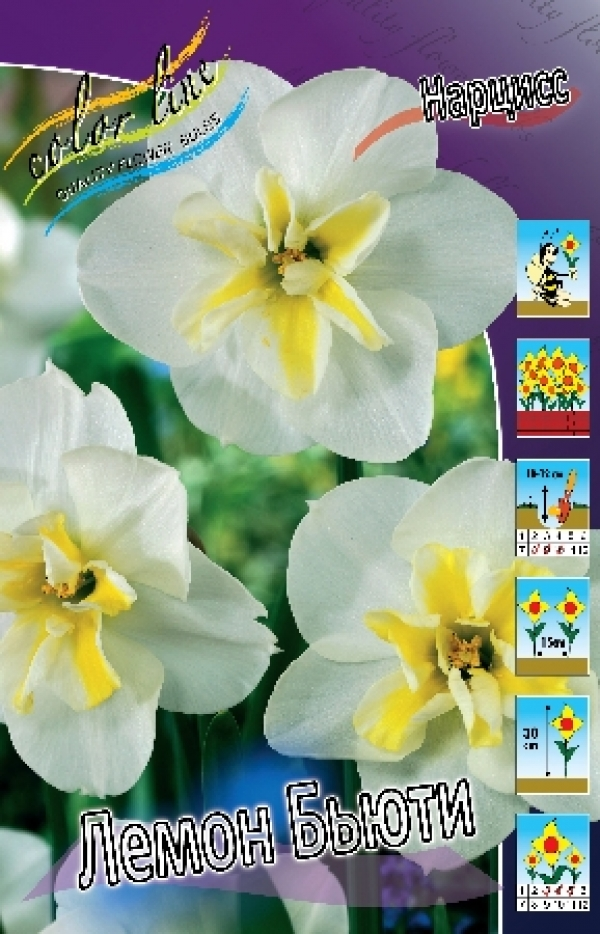 Narcissus Lemon Beauty Нарцисс Лемон Бьюти