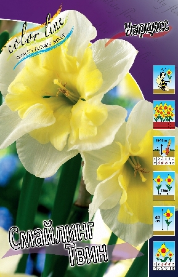 Narcissus Smiling Twin Нарцисс Смайлинг Твин
