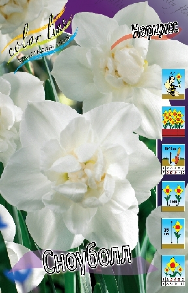 Narcissus Snowball Нарцисс Сноуболл
