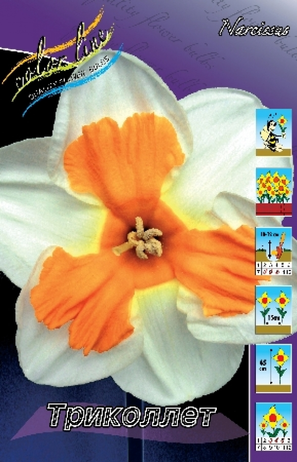 Narcissus Tricollet Нарцисс Триколлет